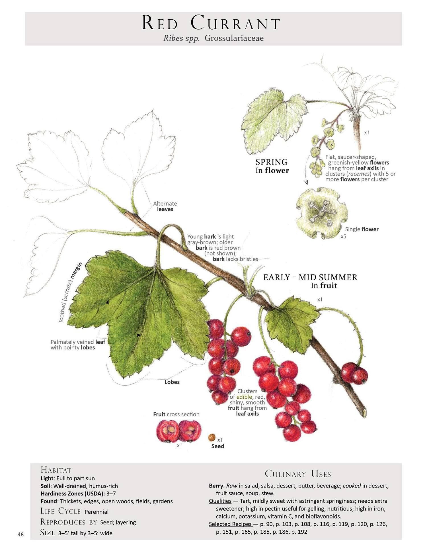 Book Review - Foraging & Feasting | Plantas Silvestres ... serapportantà Forage Jardin