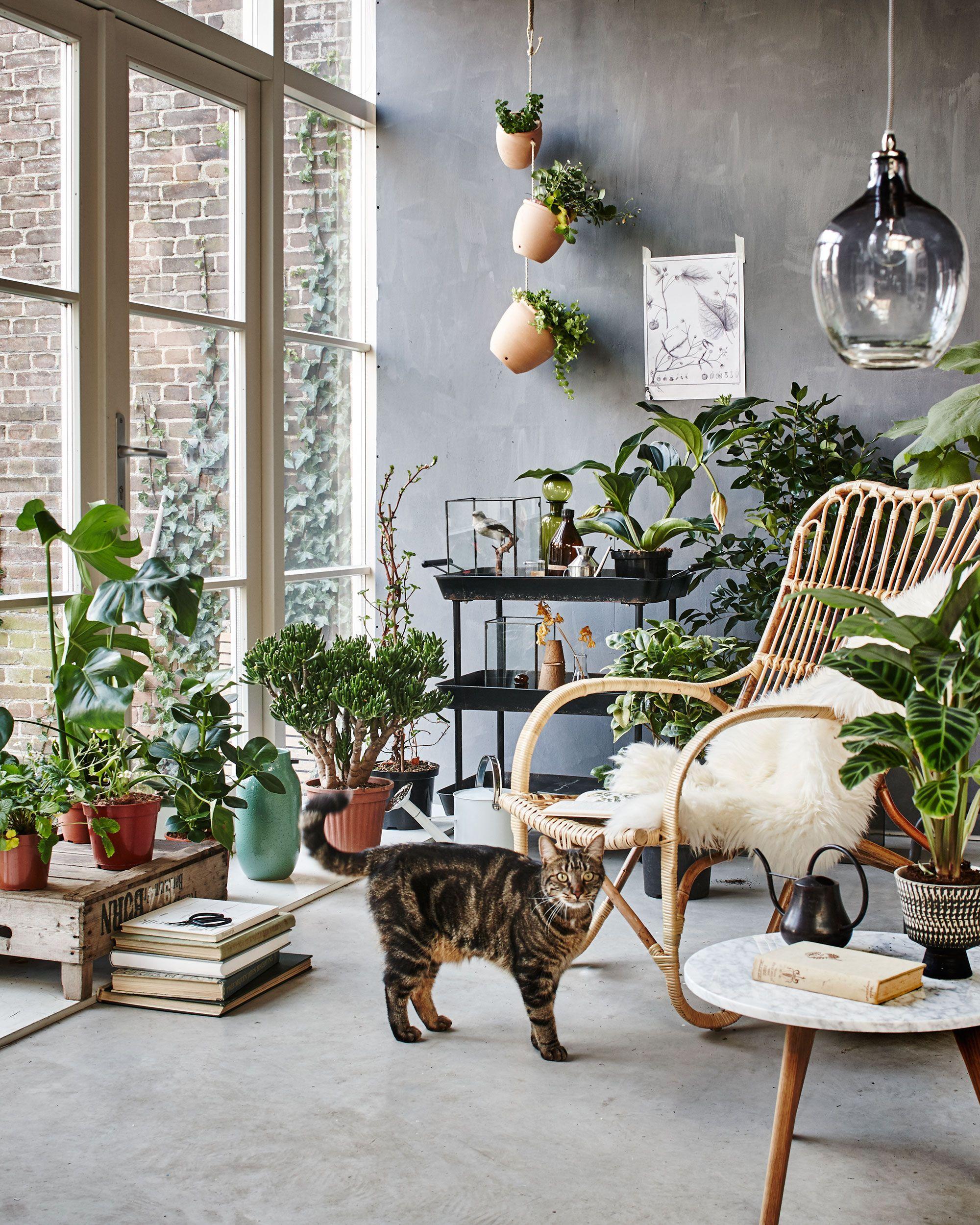 Botanic Living Room / Orangery With A Rotan Chair, Plants ... dedans Botanic Salon De Jardin