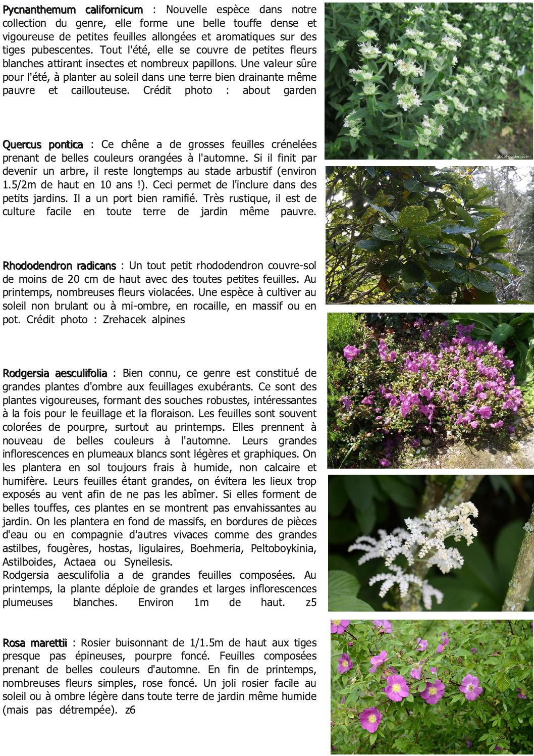 Bulletin La N'avette N°3 By Cedric Basset - Issuu destiné Arbre Pour Petit Jardin