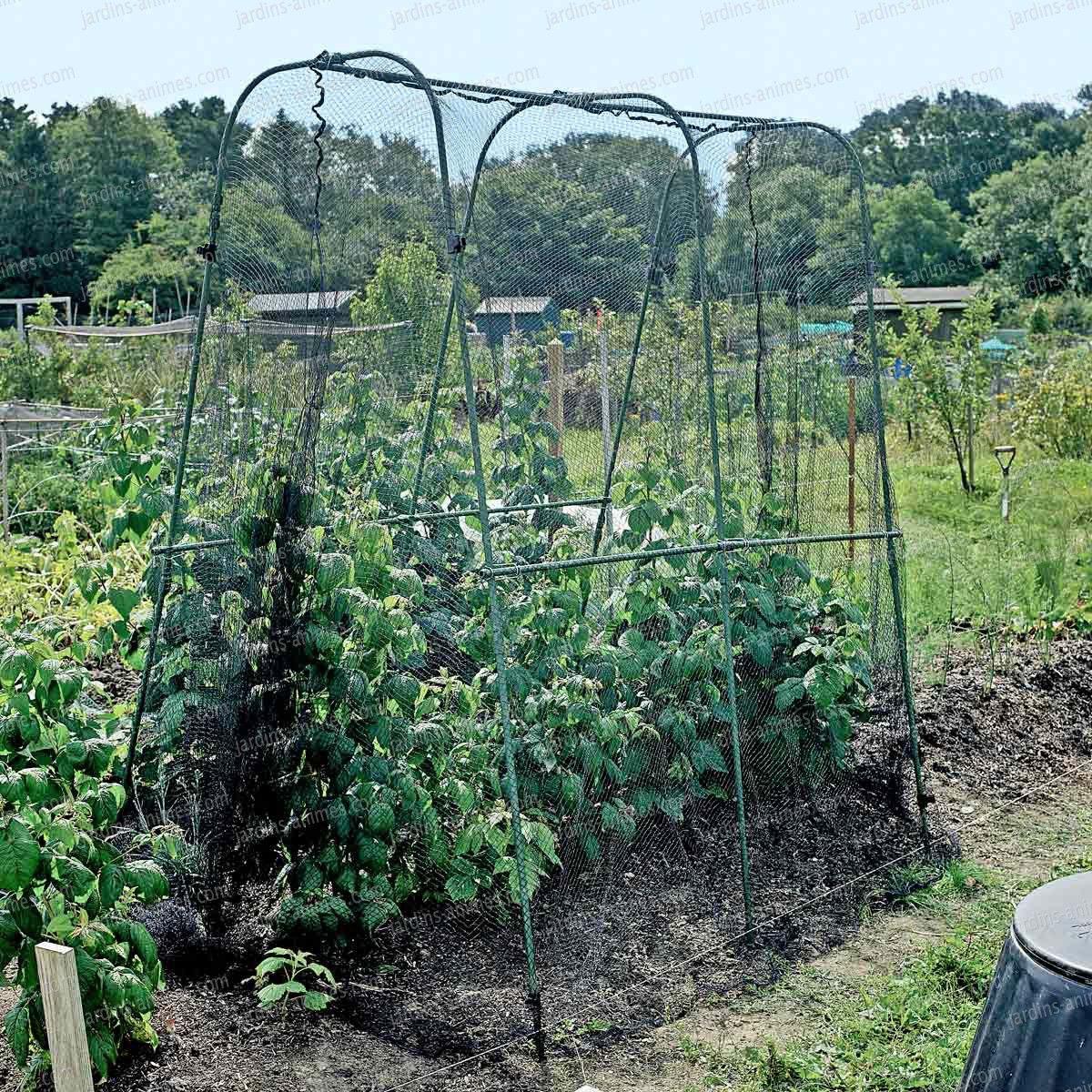 Cage Protection Des Récoltes Avec Filet Anti Oiseau Et ... avec Filet De Jardin À Oiseaux