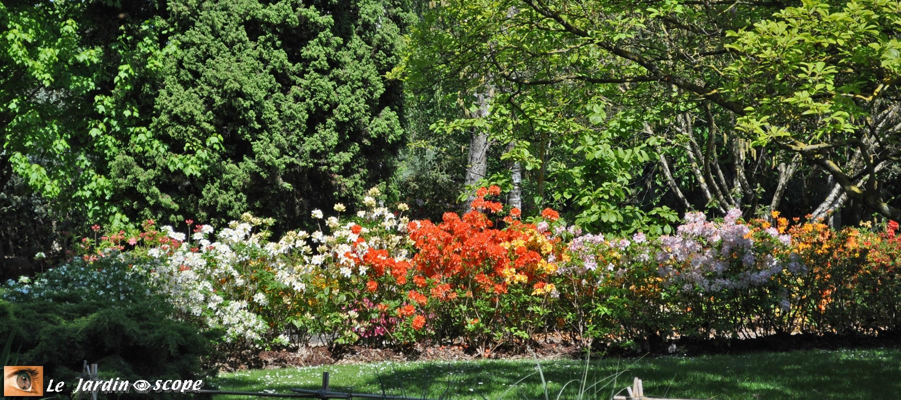 Calendrier Des Floraisons Des Arbustes Et Rosiers - Le ... encequiconcerne Buisson Pour Jardin