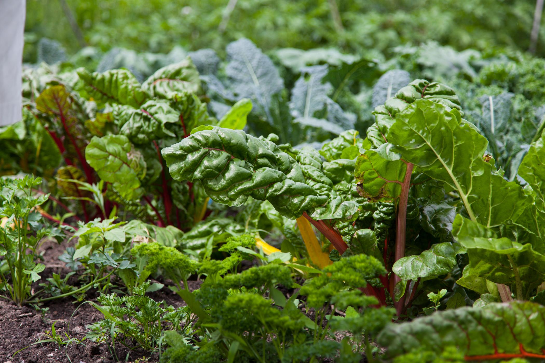 Carrefour Alimre Centre-Sud Agriculture Urbaine ... tout Serre De Jardin Carrefour