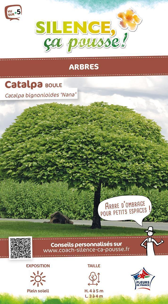 Catalpa Boule avec Arbre Pour Petit Jardin