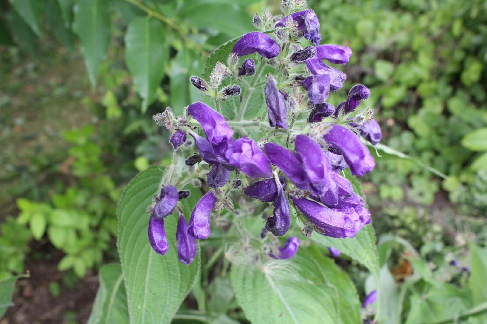 Chambres D'hôtes Au Jardin Des Violettes : Juillet 2018 serapportantà Bruler Feuilles Jardin