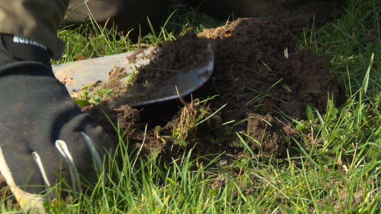 Chasser Les Taupes Ou Les Capturer Vivantes : Les Bonnes Techniques serapportantà Comment Se Débarrasser Des Taupes Dans Un Jardin