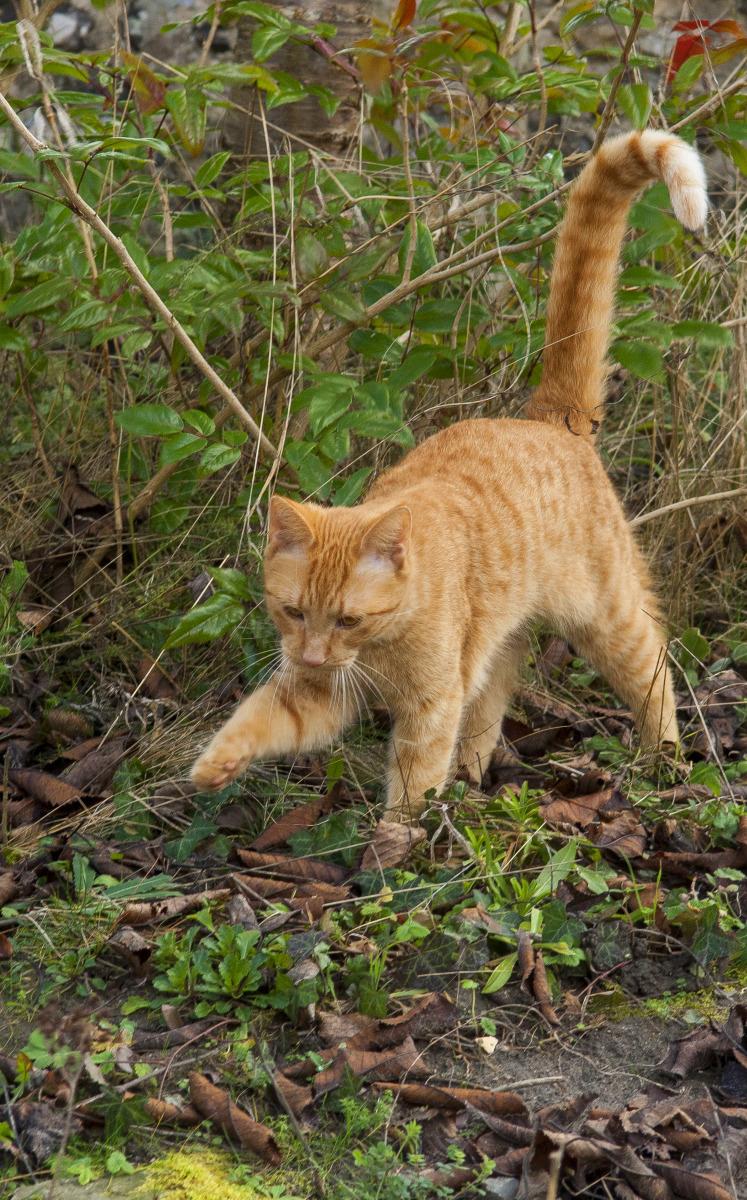 Chats : Les Méthodes Pour Les Éloigner Pour De Bon avec Chasser Les Chats Du Jardin