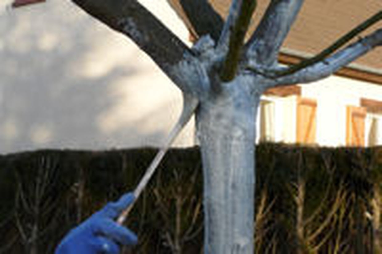 Chaux Vive : Propriétés Et Utilisation Au Jardin à Chaux Jardin