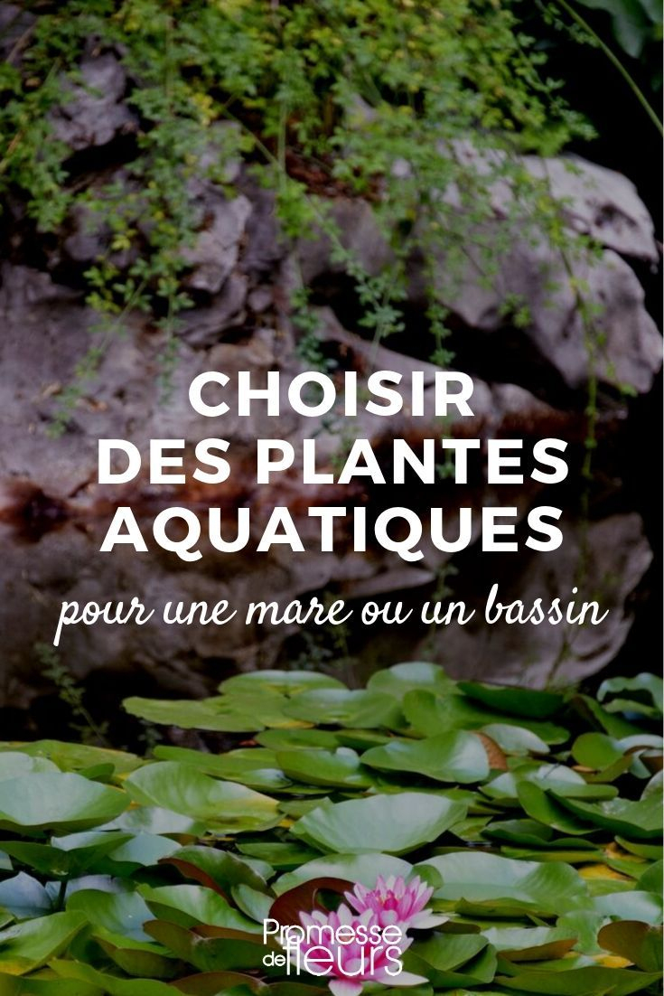 Choisir Des Plantes Aquatiques Pour Une Mare Ou Un Bassin ... avec Plante Bassin De Jardin