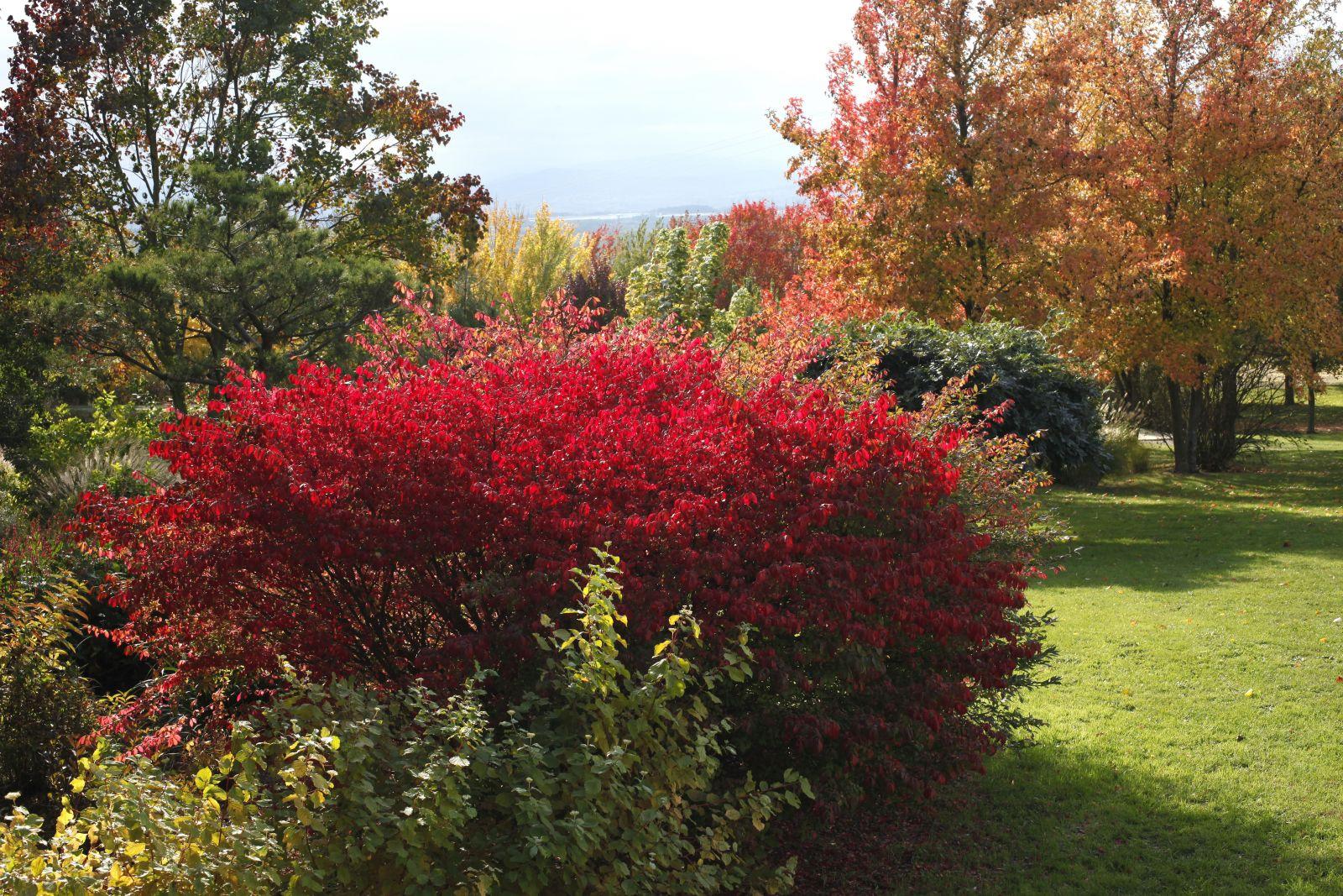 Choisir Et Planter Les Arbres Aux Plus Belles Couleurs D'automne concernant Arbustes Decoration Jardin