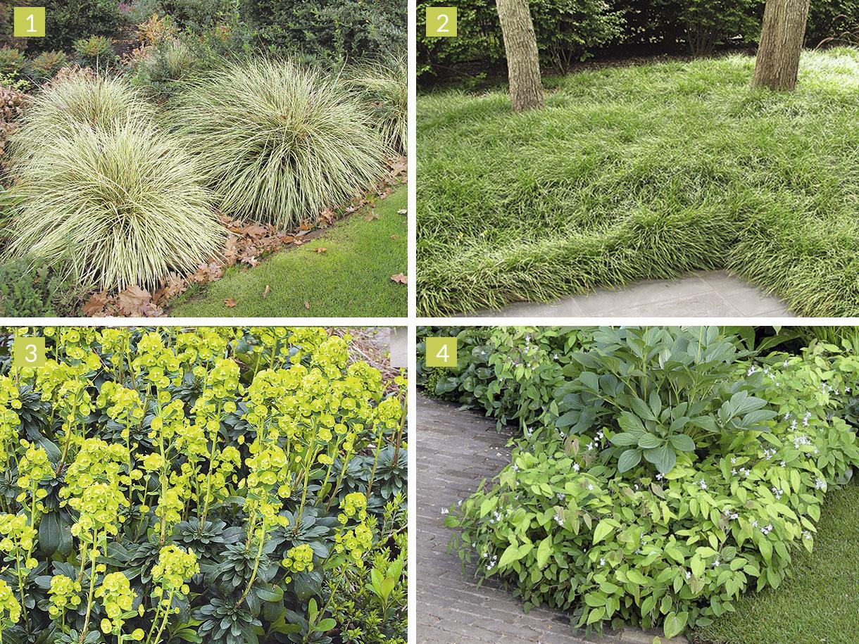 Choisir Les Couvre-Sols Selon L'exposition - Détente Jardin avec Plante Jardin Ombre