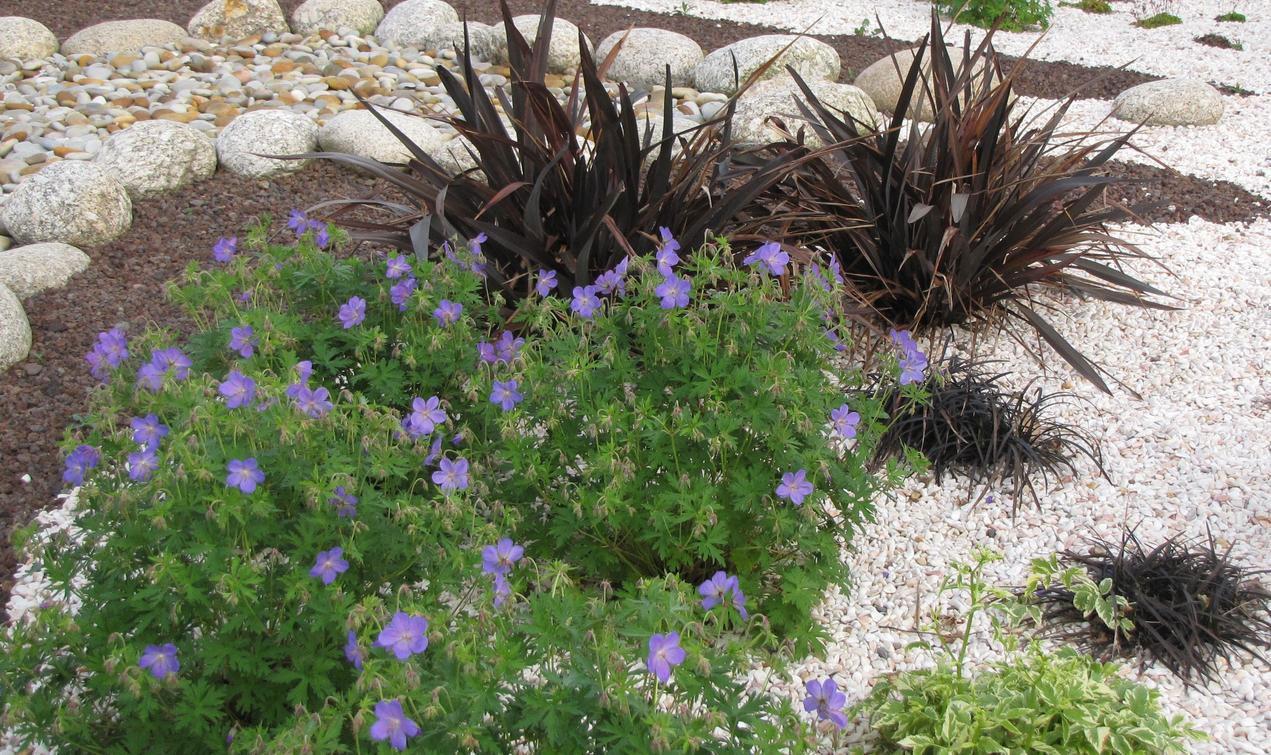 Choisir Les Plantes Et Le Gravier D'un Jardin Sur Gravier ... tout Jardin Avec Galets Blancs