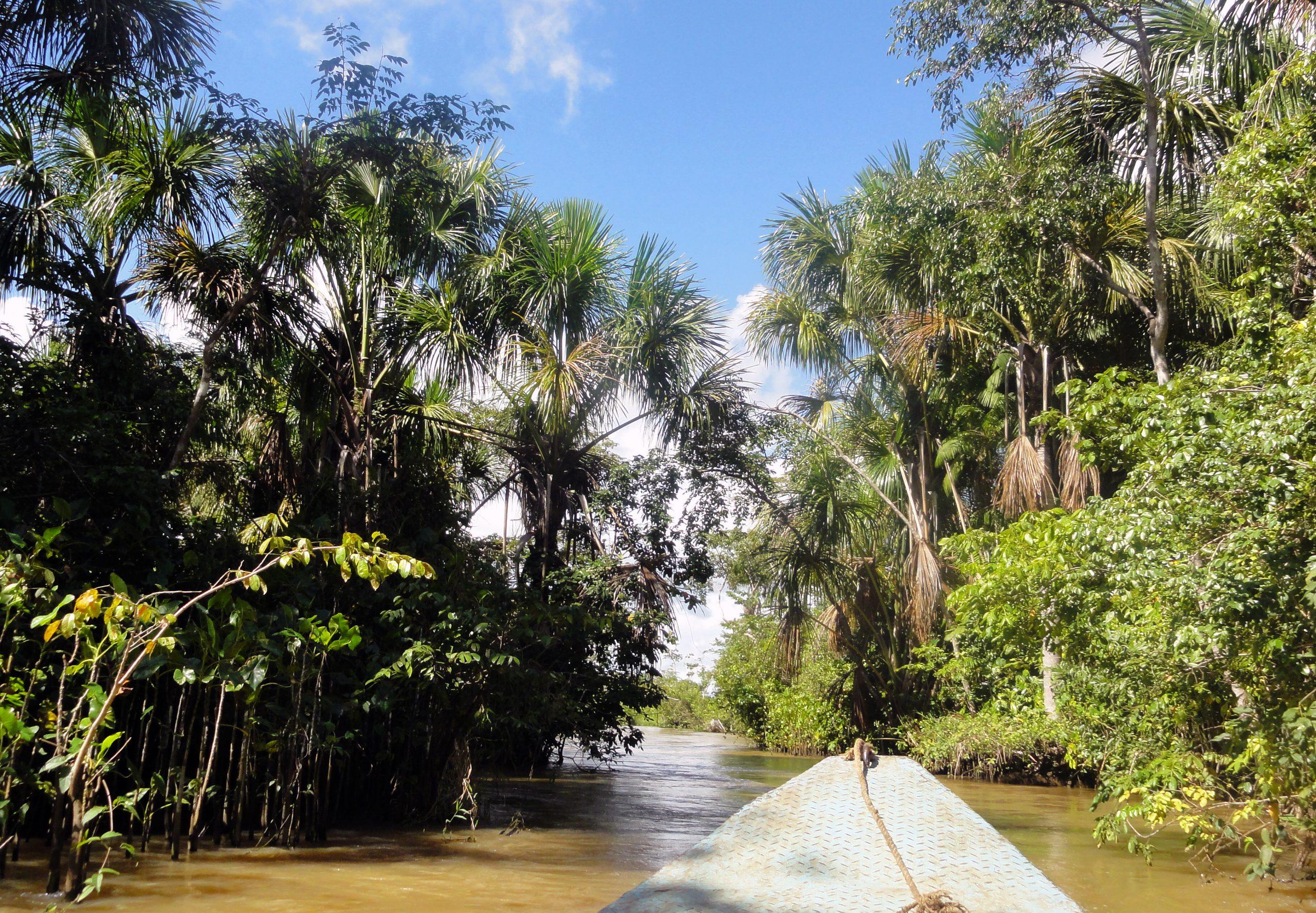 Cjb - Chercheurs avec Serre De Jardin Amazon