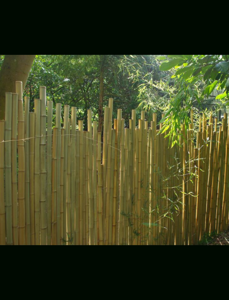 Clôture Bambou Japonaise Ø5Cm intérieur Pare Vue Jardin