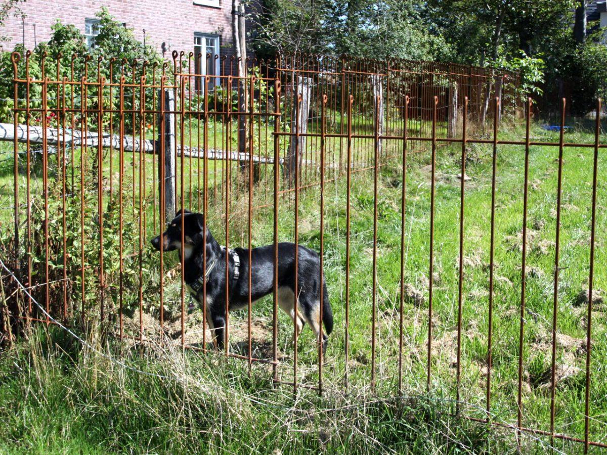Clôture Pour Chiens Anneau - Melabel® Clôtures concernant Barriere Jardin Pour Chien