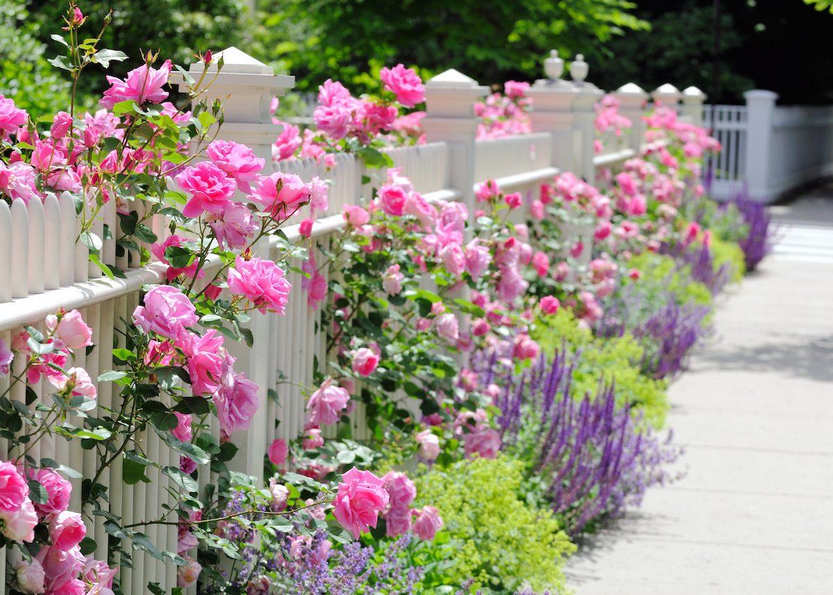 Clôturer Son Jardin : Faire Le Bon Choix - Blog Déco - Clem Atc serapportantà Cloturer Son Jardin
