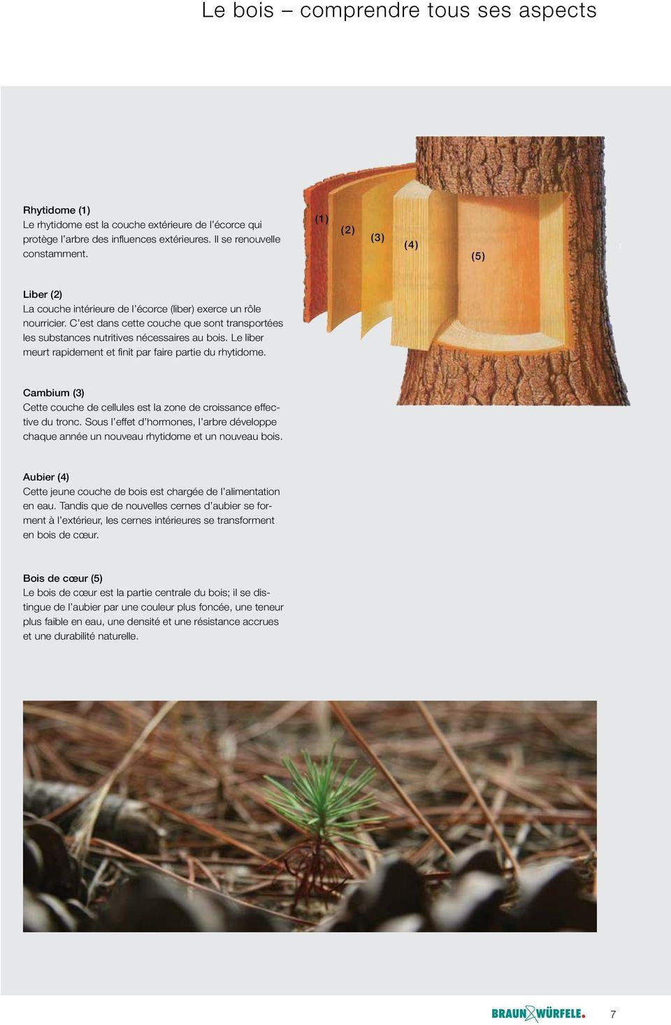 Clôtures Décoratives Supports De Base Pour Panneaux En Bois ... à Panneau De Bois Jardin