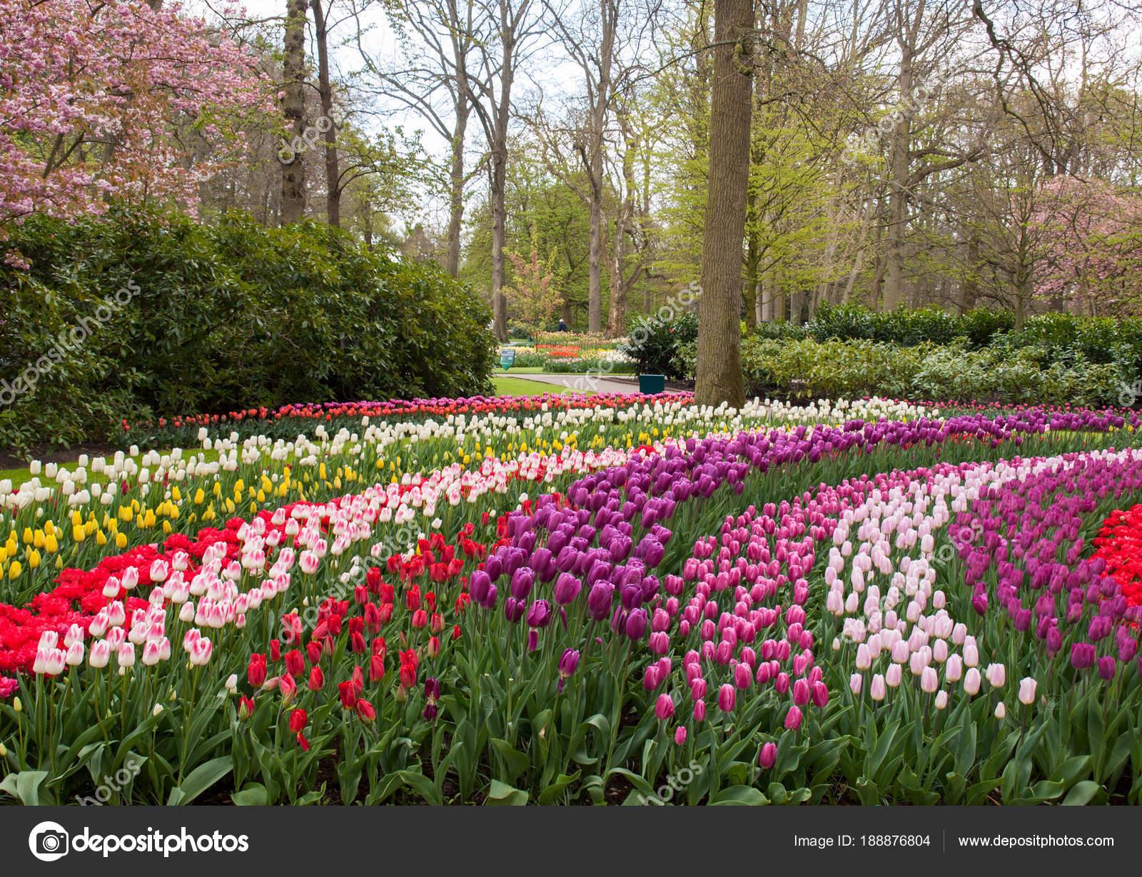 Colorful Flowers Keukenhof Garden Lisse Holland Netherlands ... serapportantà Jardin De Keukenhof