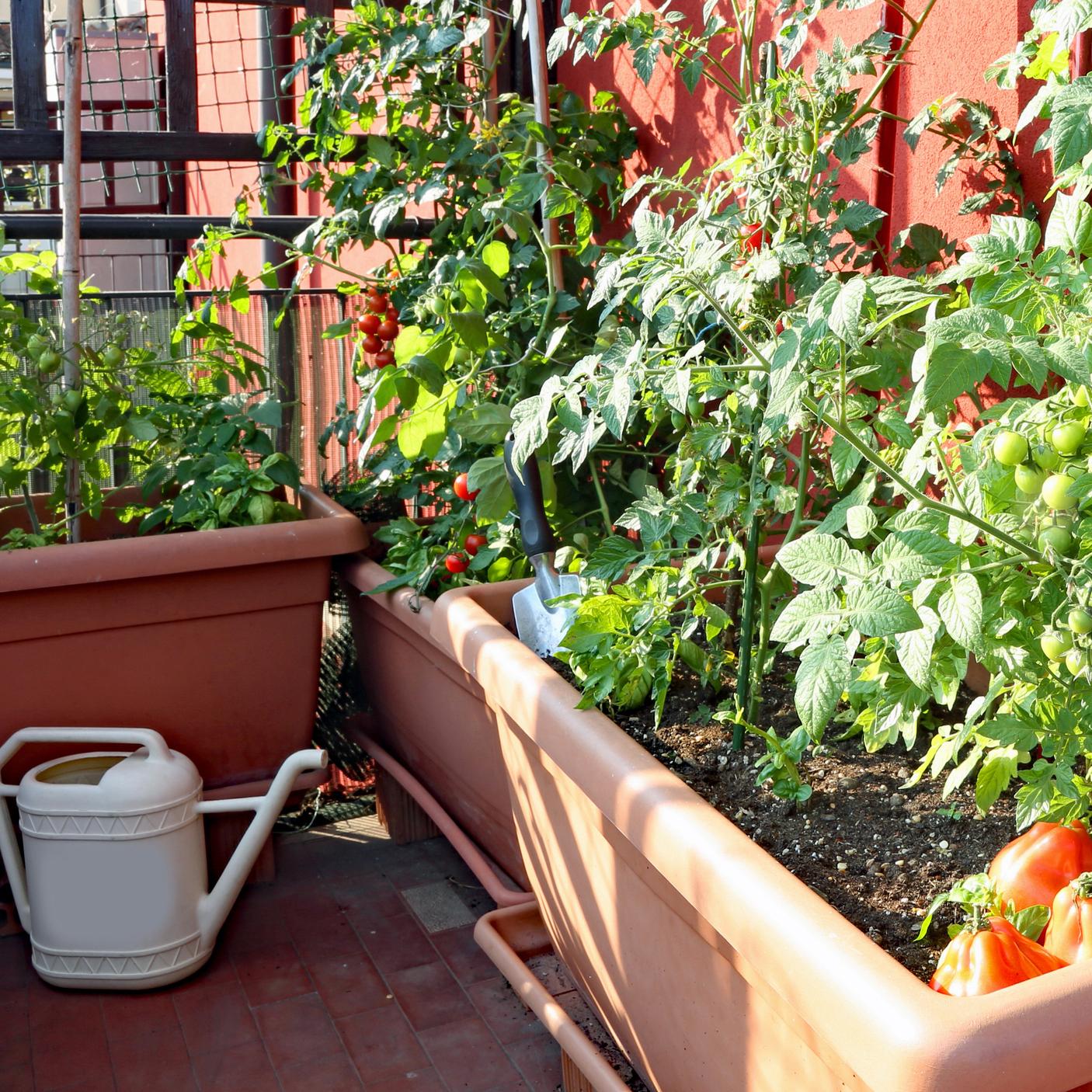 Comment Aménager Un Jardin Potager Sur Son Balcon ? – La ... dedans Faire Un Jardin Sur Son Balcon