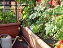Comment Aménager Un Jardin Potager Sur Son Balcon ? – La ... encequiconcerne Mini Jardin Balcon