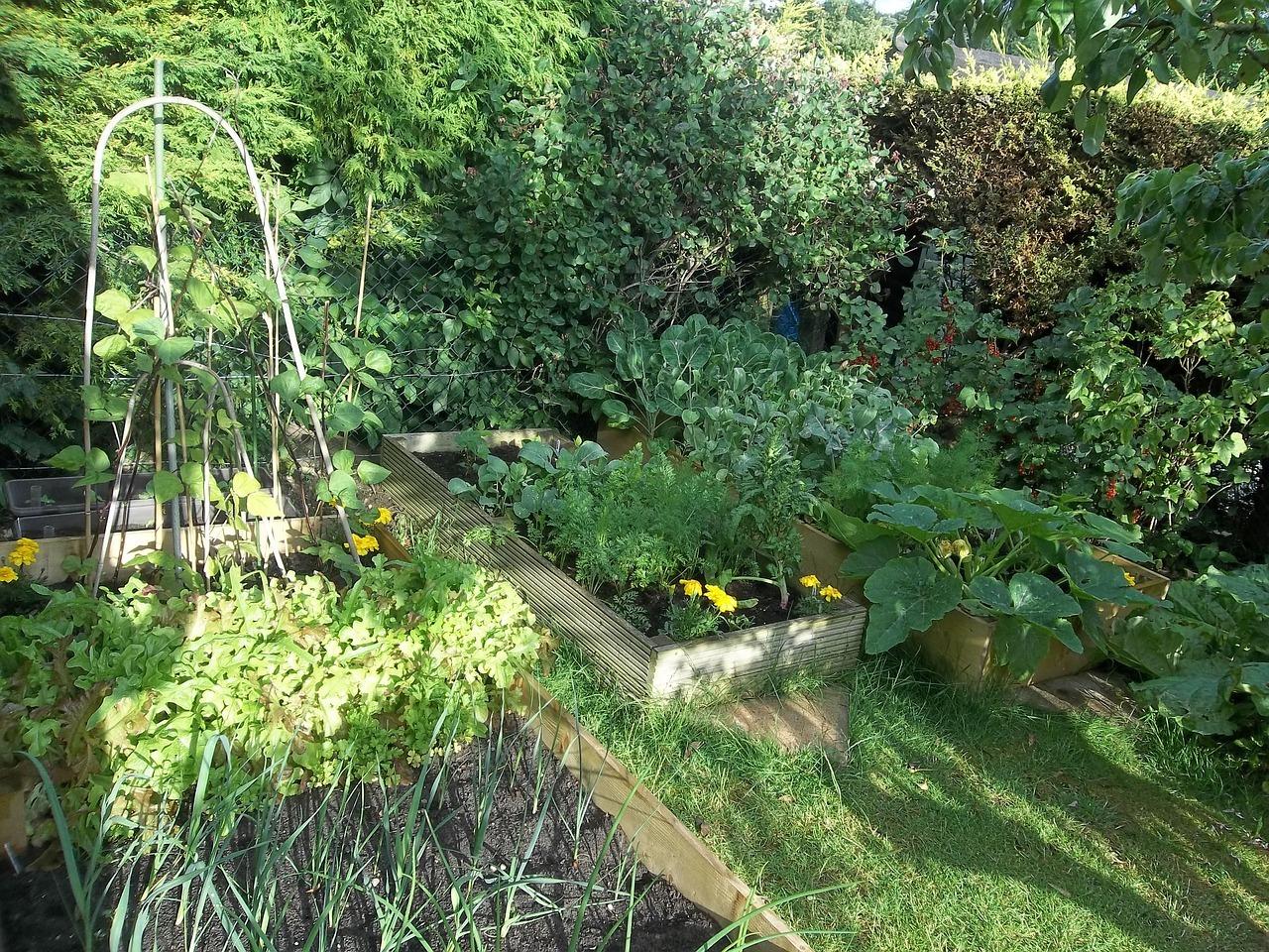 Comment Bien S'organiser Au Potager ? concernant Organisation D Un Jardin Potager