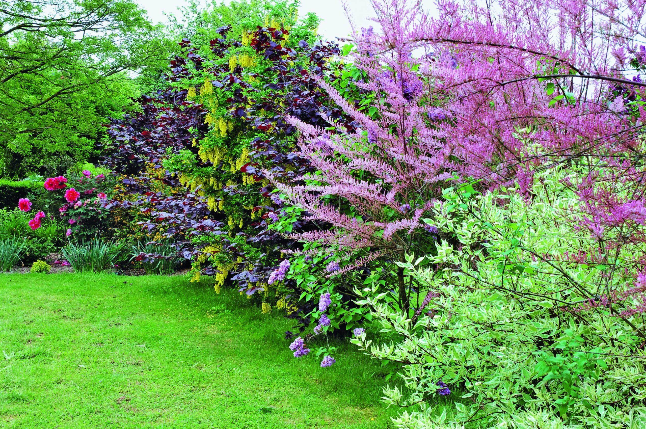Comment Choisir Les Arbustes Pour Votre Haie serapportantà Arbre De Jardin A Croissance Rapide