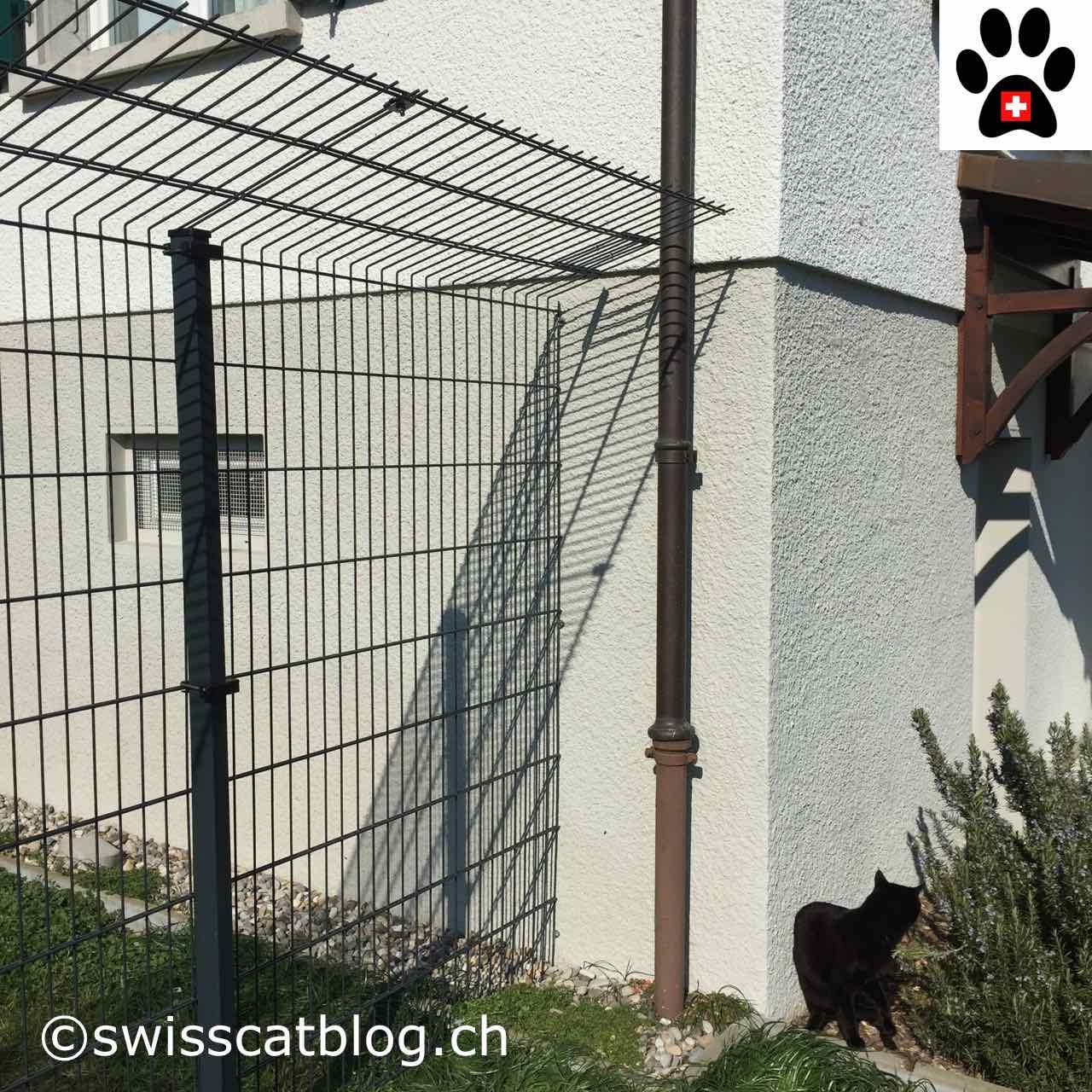 Comment Clôturer Mon Jardin Pour Que Mes Chats Puissent ... tout Barriere Jardin Pour Chien