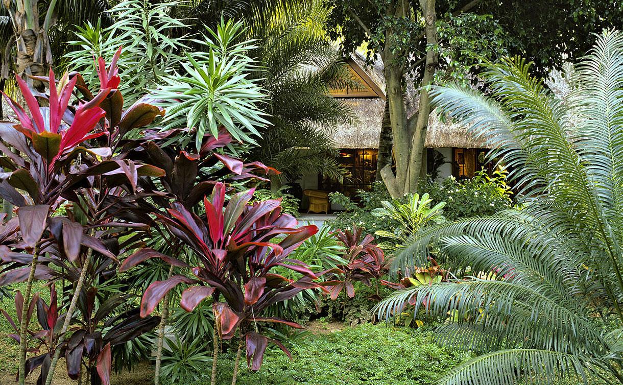 Comment Créer Un Jardin Exotique Durable | Détente Jardin tout Comment Realiser Un Jardin