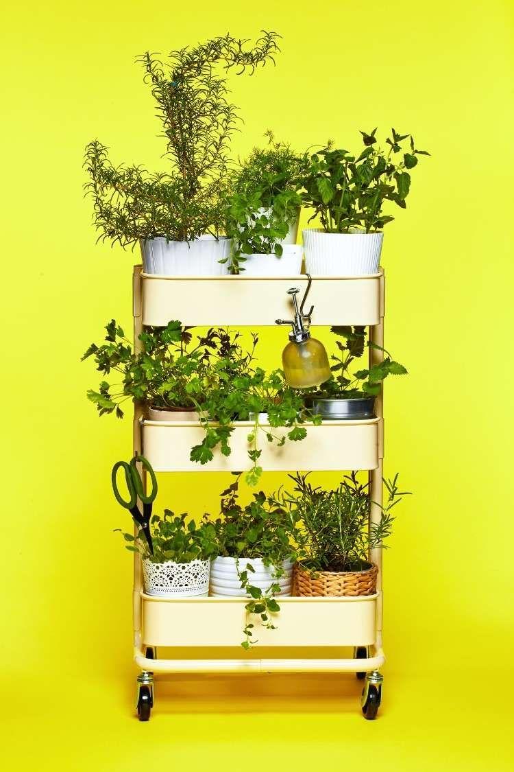 Comment Cultiver Des Plantes Aromatiques Dans La Cuisine ... serapportantà Ikea Desserte Jardin