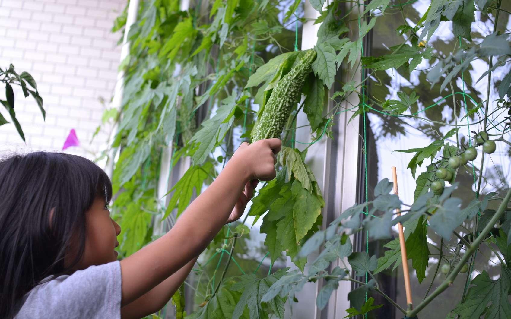 Comment Cultiver Un Potager Sur Son Balcon ? tout Faire Un Jardin Sur Son Balcon