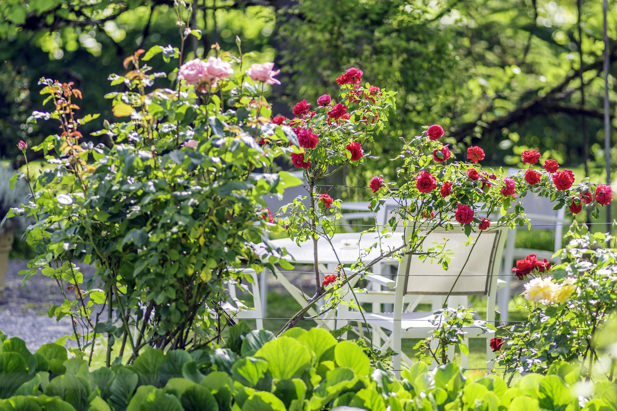 Comment Décorer Son Jardin ? - Maison&travaux pour Grosse Pierre Decoration Jardin