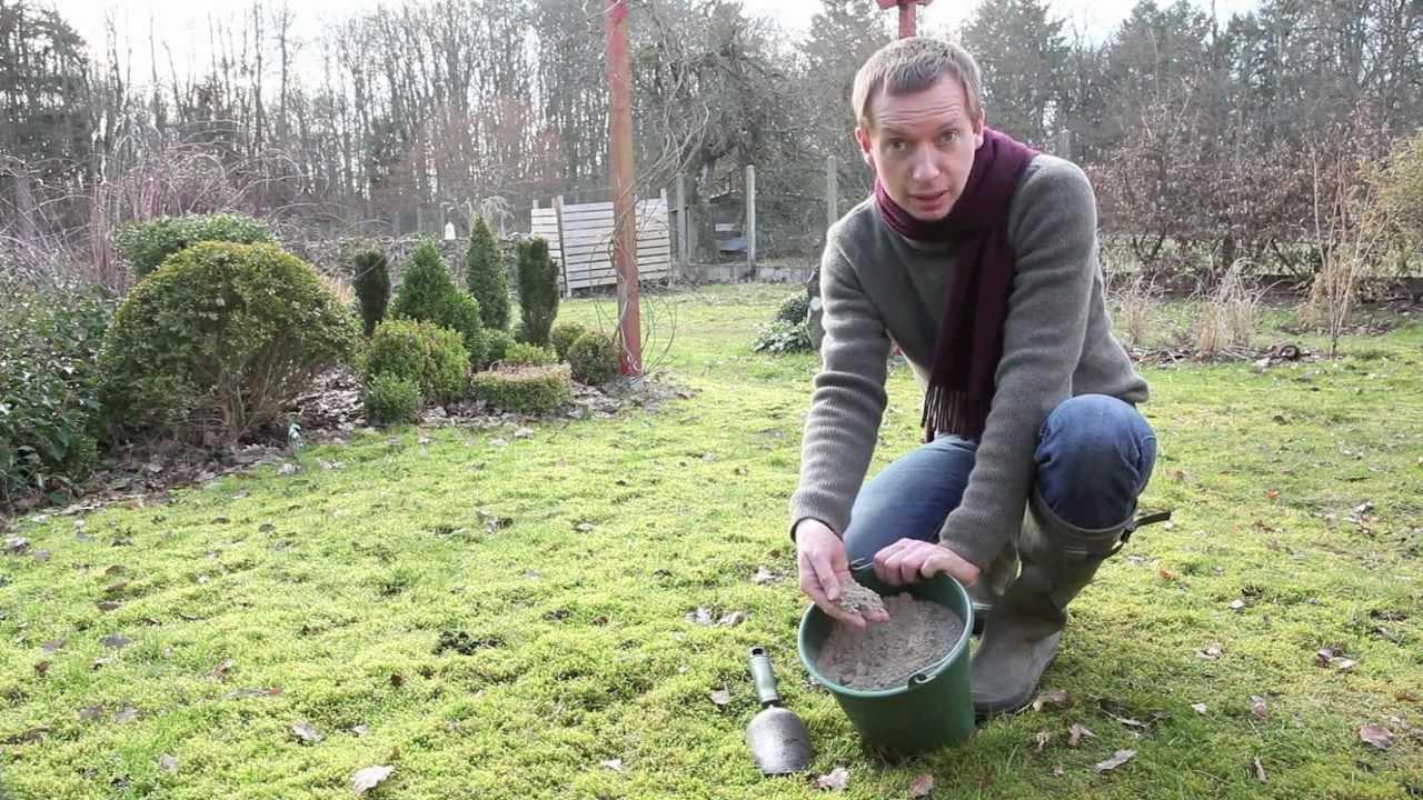 Comment Éliminer La Mousse De Son Gazon? intérieur La Chaux Pour Le Jardin