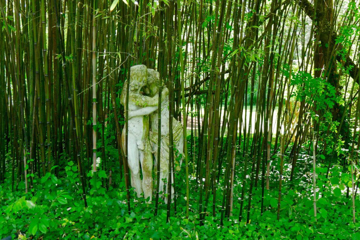 Comment Éliminer Les Bambous Cavaleurs - Hortus Focus I Mag destiné Comment Eliminer Les Bambous Dans Un Jardin