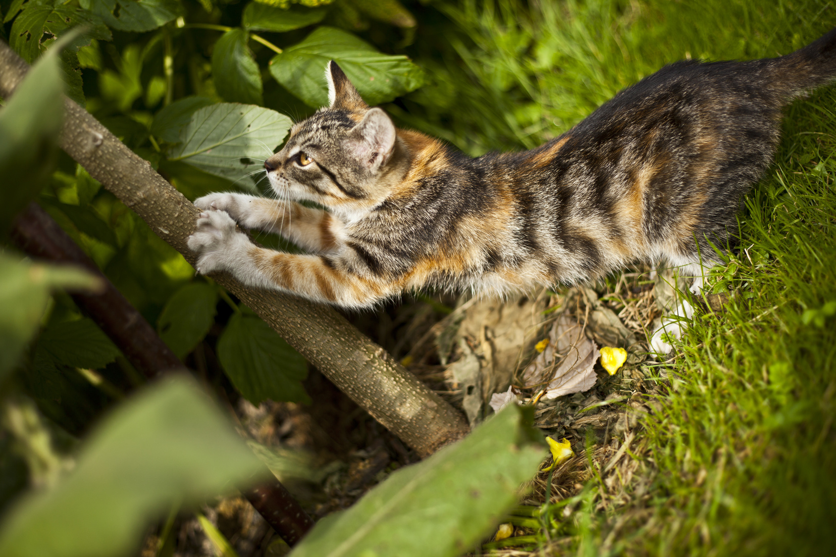 Comment Éloigner Les Chats De Son Jardin ? Nos Conseils destiné Chasser Les Chats Du Jardin
