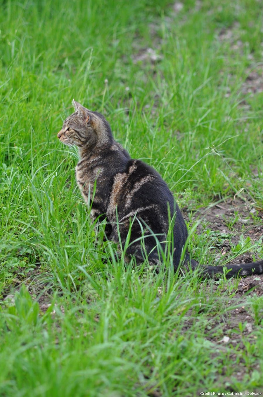 Comment Éloigner Les Chats De Votre Jardin ? | Eloigner Les ... destiné Repulsif Chat Jardin Naturel