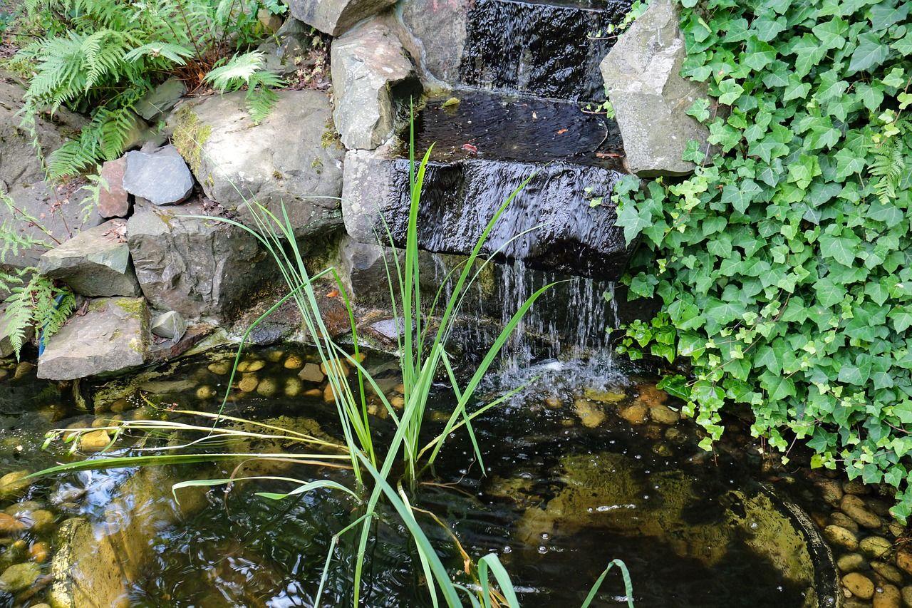 Comment Entretenir Un Bassin De Jardin ? à Kit Bassin De Jardin