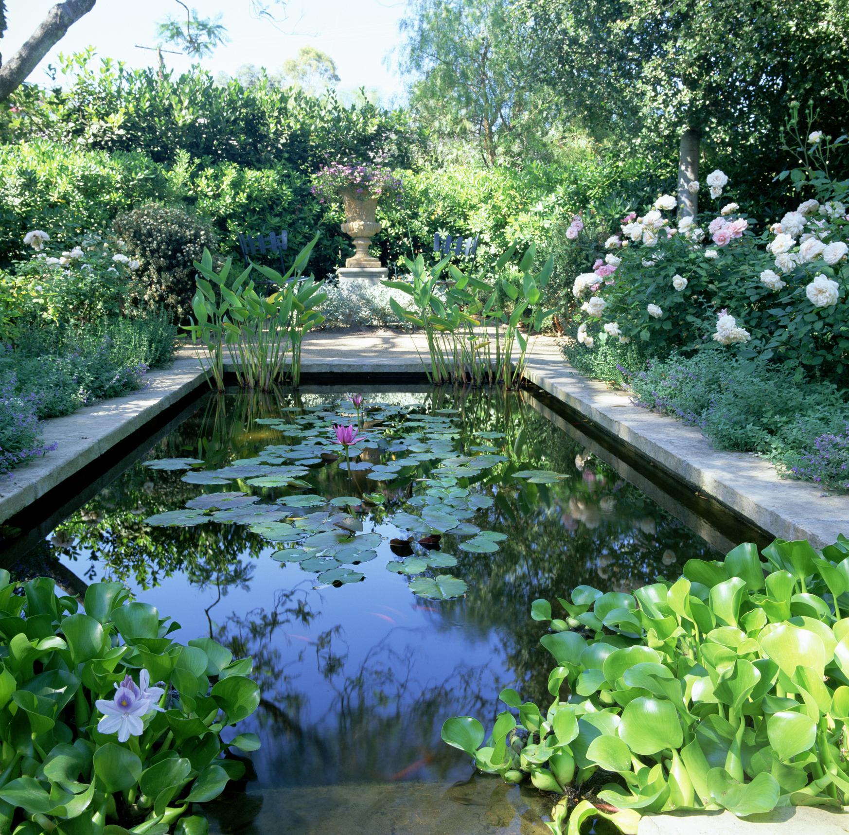 Comment Entretenir Un Bassin De Jardin ? dedans Entretien D Un Bassin De Jardin