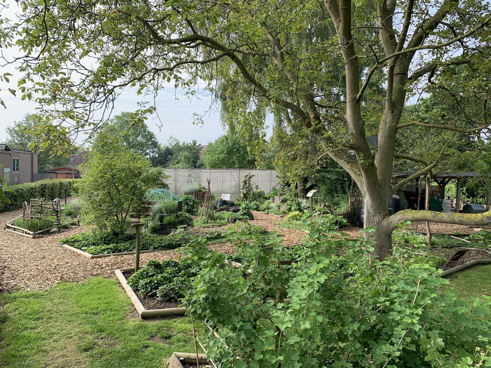 Comment Et Pourquoi Pailler Au Jardin ? encequiconcerne Copeaux De Bois Jardin