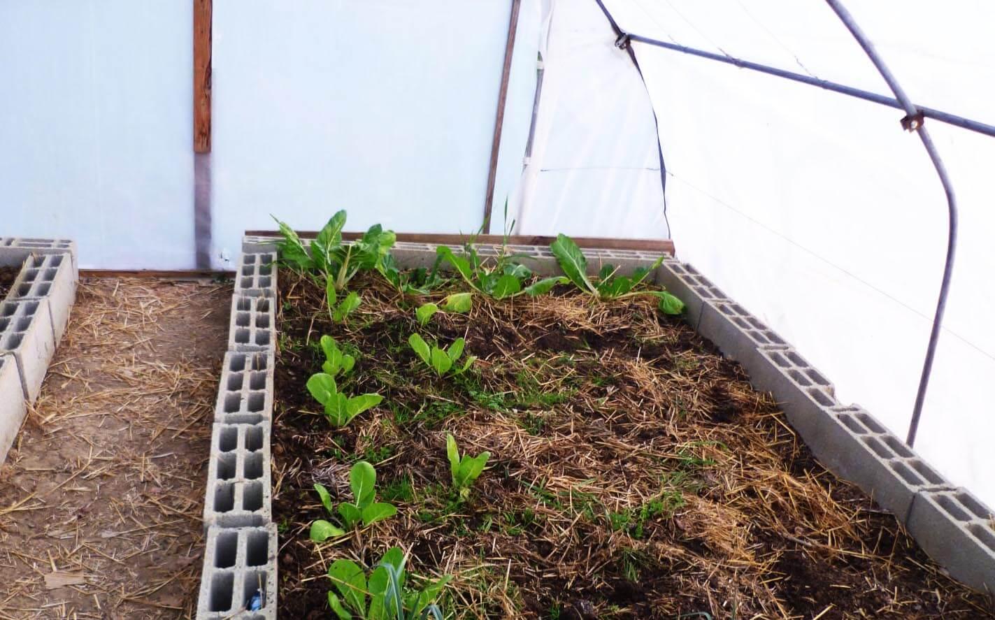 Comment Fabriquer Votre Serre ? - Le Blog De Jardinet.fr serapportantà Fabriquer Une Serre De Jardin