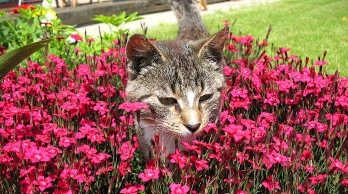 Comment Faire Fuir Les Chats De Votre Jardin ? à Repulsif Chat Jardin