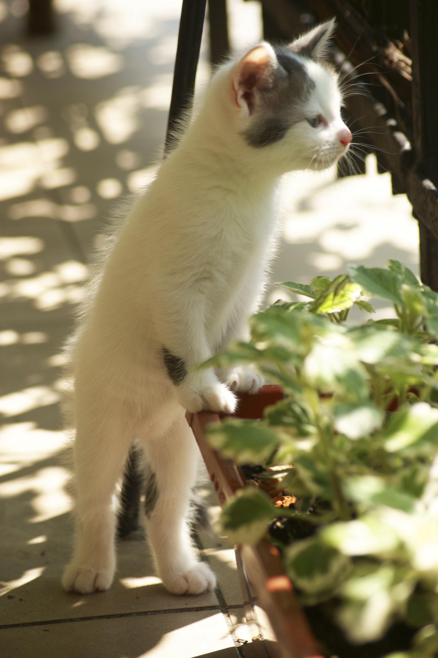 Comment Faire Fuir Les Chats ? - Ooreka encequiconcerne Repulsif Chat Jardin Naturel