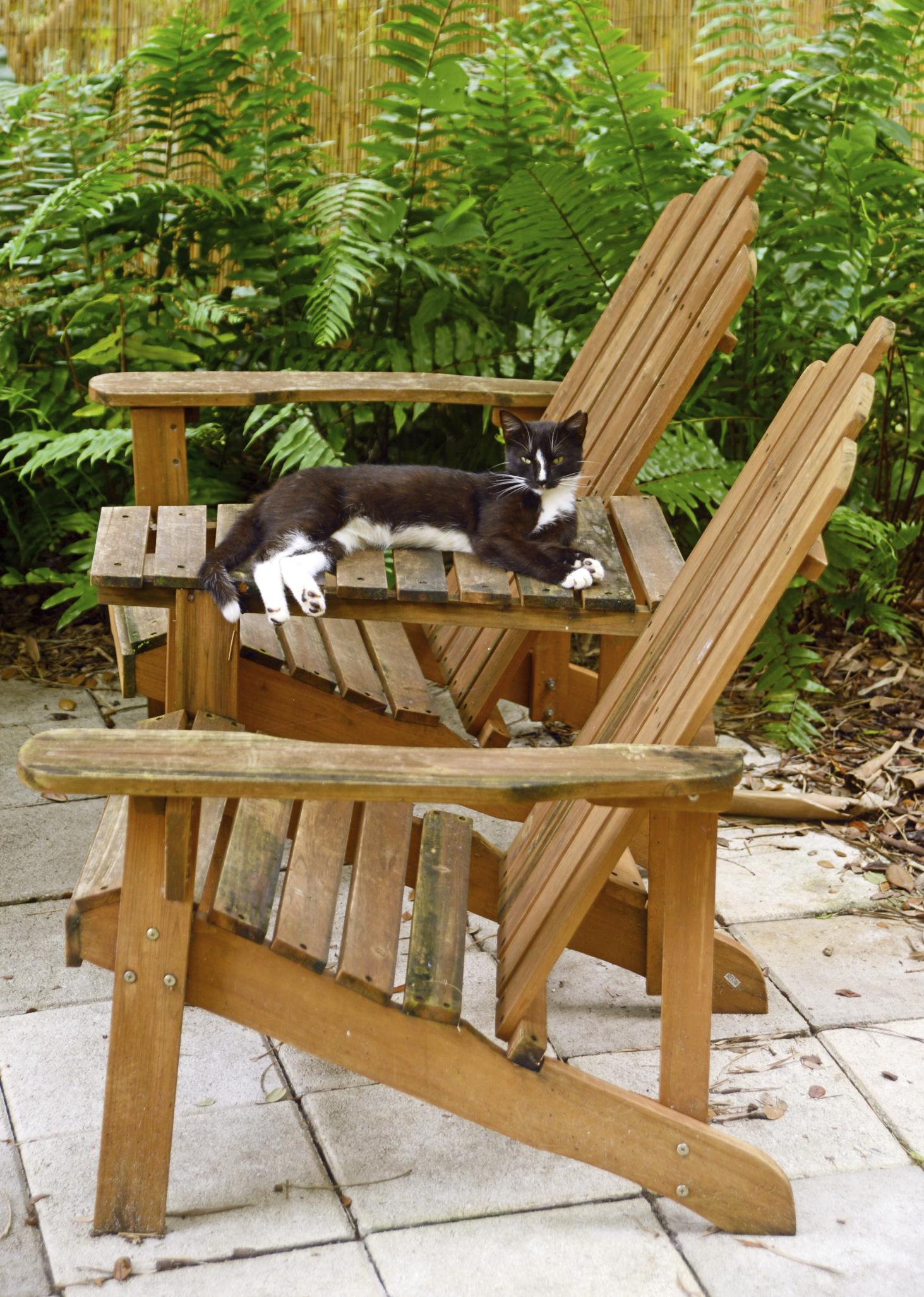 Comment Faire Fuir Les Chats ? - Ooreka serapportantà Chasser Les Chats Du Jardin