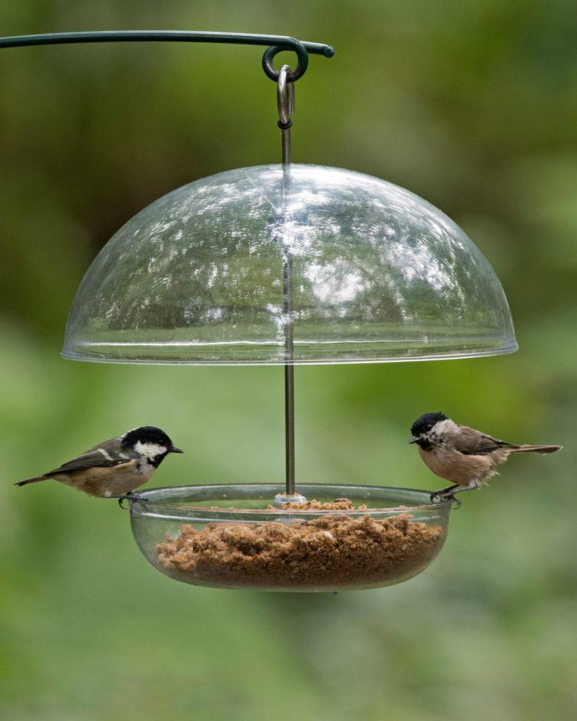Comment Installer Une Mangeoire Oiseaux - Hello-Birdy serapportantà Abri Oiseau Jardin