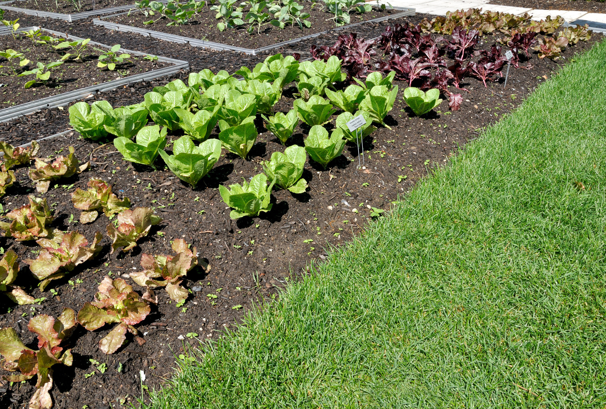 Comment Réussir À Cultiver Son Jardin Potager En S'amusant ! tout Faire Un Petit Potager Dans Son Jardin
