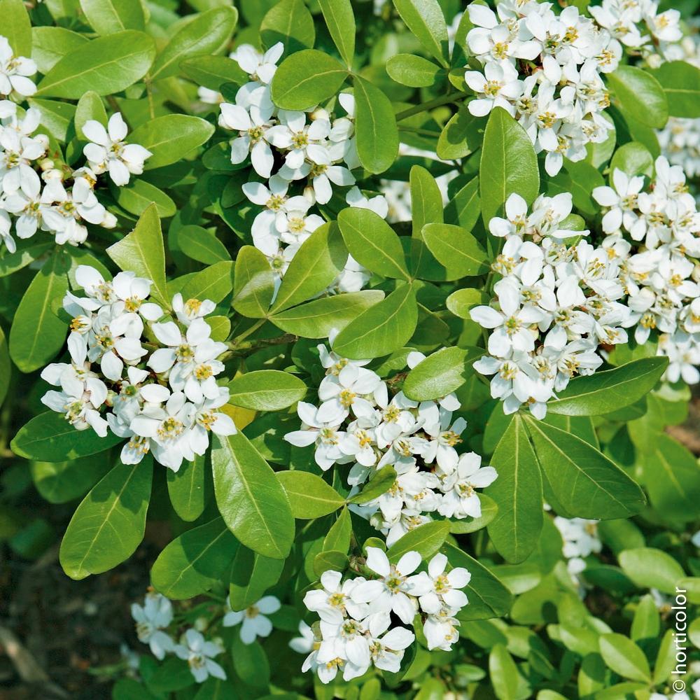 Comment Réussir La Plantation D'arbustes Et De Grimpants ? concernant Buisson Pour Jardin
