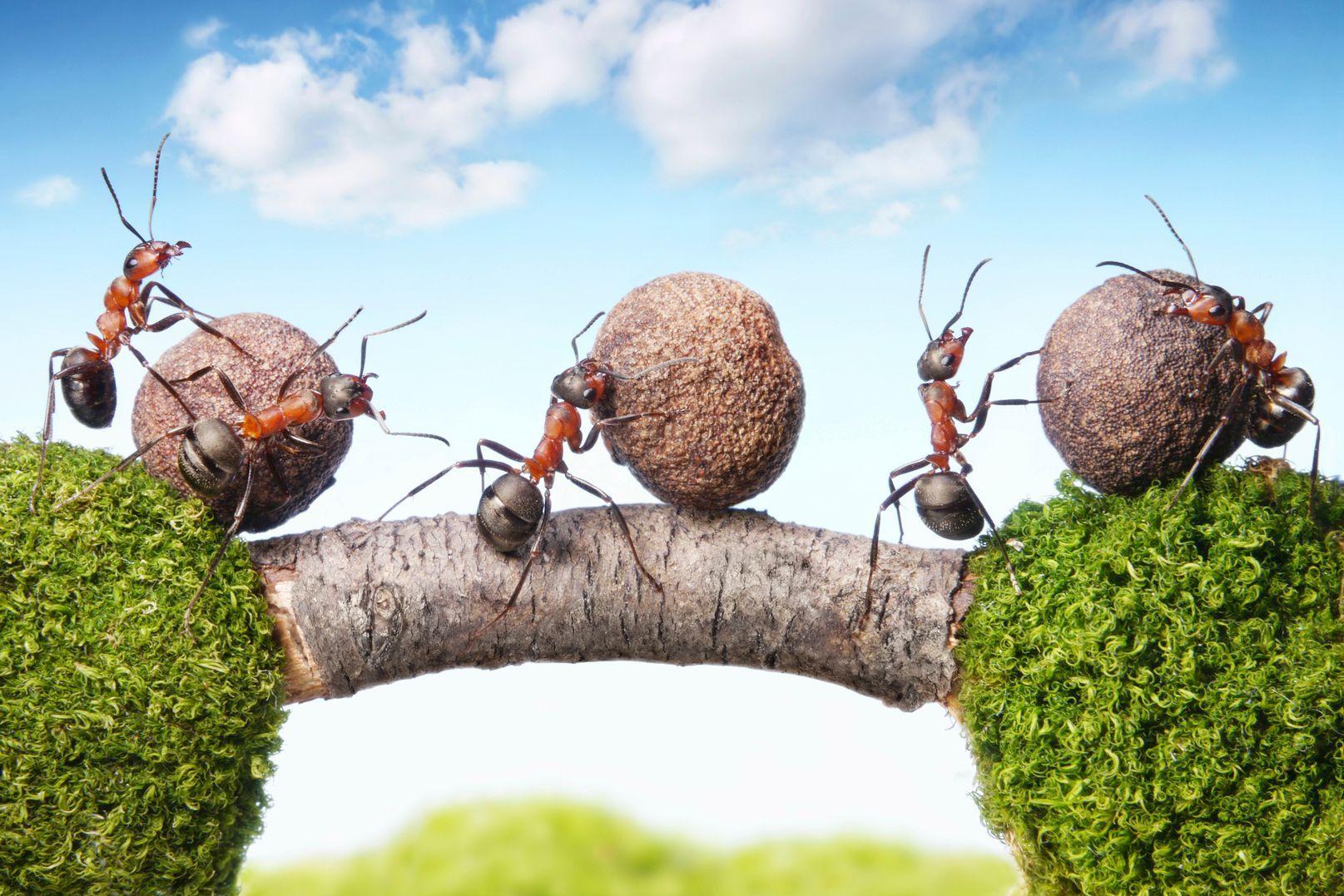 Comment Se Débarrasser Des Fourmis ? à Comment Éliminer Des Fourmis Dans Le Jardin
