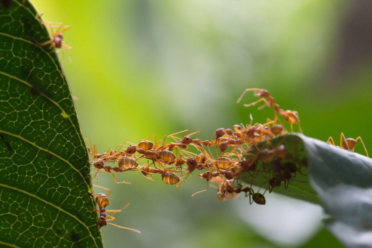 Comment Se Débarrasser Des Fourmis? | Central Extermination avec Comment Éliminer Des Fourmis Dans Le Jardin