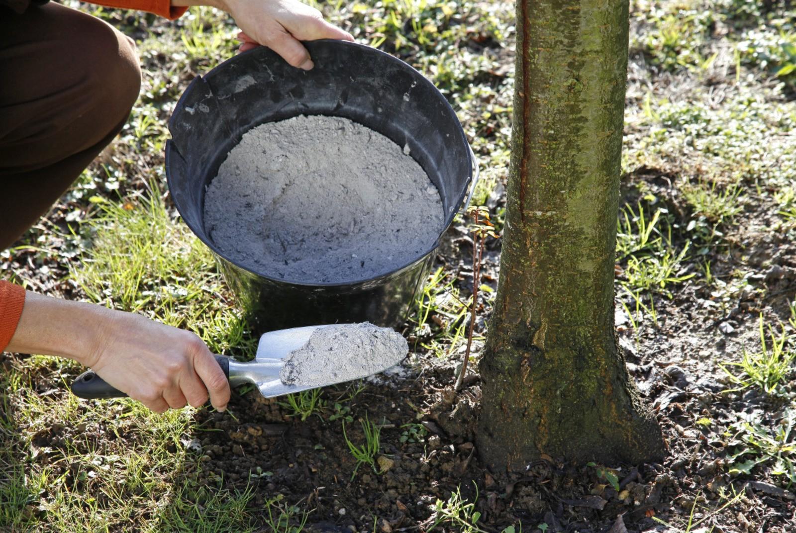 Comment Utiliser Les Cendres De Bois Au Jardin ? pour La Potasse Au Jardin