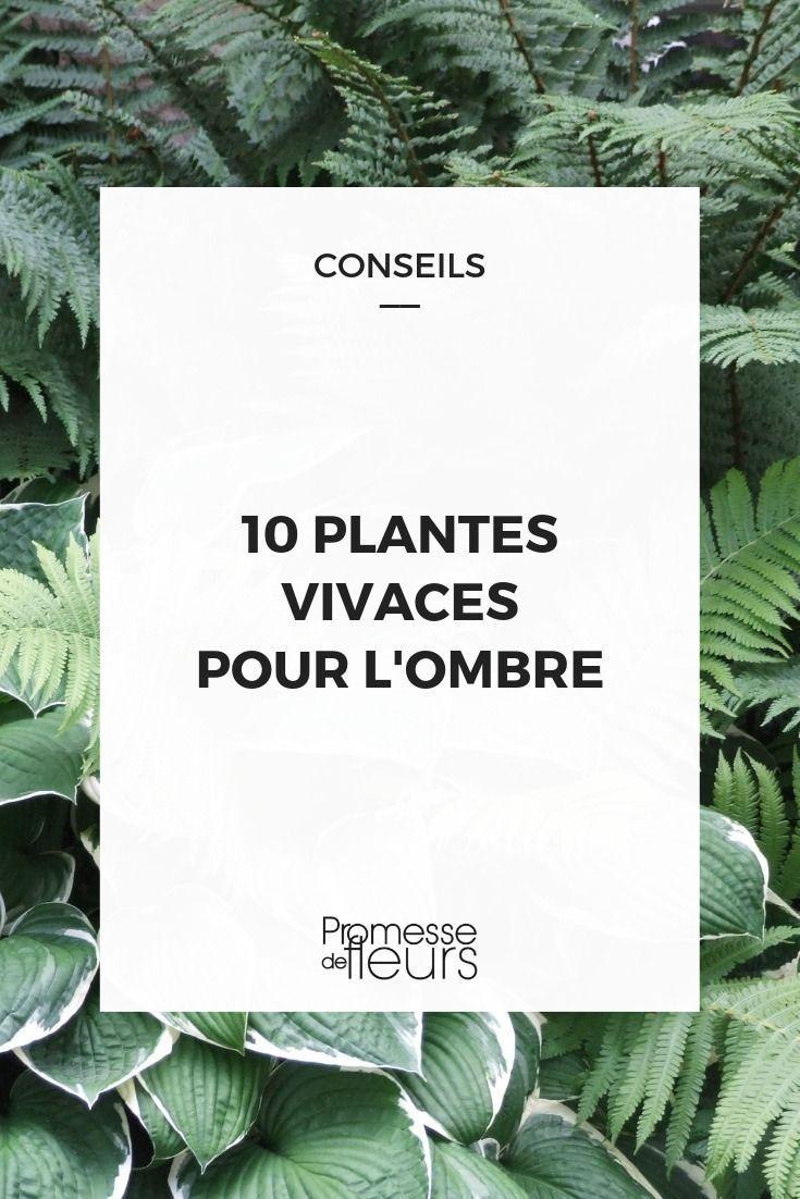 Composer Un Massif D'ombre : Quelles Plantes Choisir ... intérieur Plante Jardin Ombre