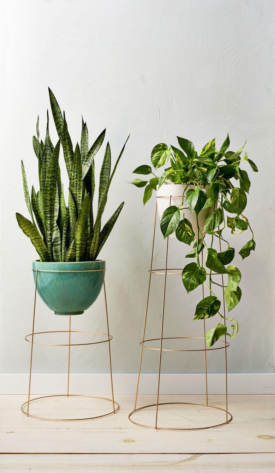 Cool Plant Stand Design Ideas For Indoor Houseplant | Deco ... intérieur Support Abri De Jardin