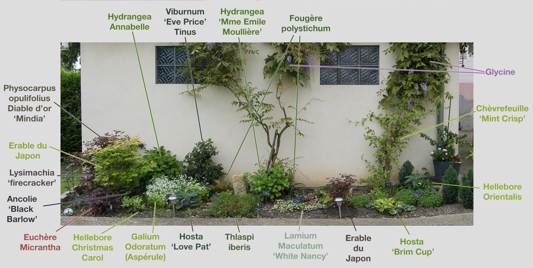 Créer Un Massif À L'ombre Dans Son Jardin (Fleurs, Arbustes ... intérieur Plante Jardin Ombre